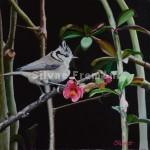 Mélanie la Huppée  Huile sur toile encadrée 30 x 30 cm