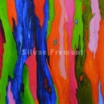Rainbow Bark IVHuile sur bois10 x 10 cm