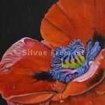 Poppy Heart IIHuile sur bois10 x 10 cm